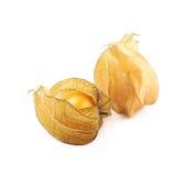 2 плодоовощ физалиса с шелухой Стоковое Изображение RF