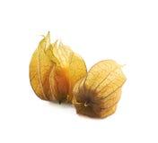 2 плодоовощ физалиса с шелухой Стоковые Фотографии RF