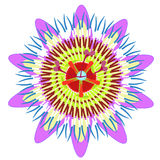 Плодоовощ цветка страсти голубой тропический также вектор иллюстрации притяжки corel Стоковые Изображения