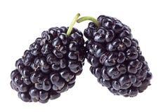 2 плодоовощ шелковицы Стоковая Фотография