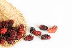 Плодоовощ шелковицы Стоковое Изображение RF