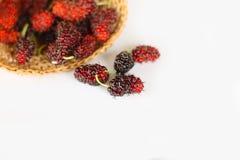 Плодоовощ шелковицы Стоковые Изображения RF