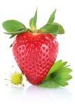 Плодоовощ ягоды клубники при листья изолированные на белизне Стоковые Фото
