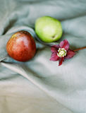 Плодоовощ Стоковая Фотография