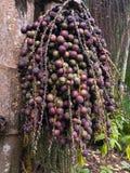 Плодоовощ Стоковое Фото