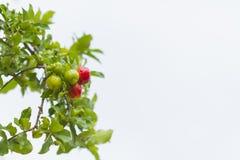 Плодоовощ Acerola Стоковая Фотография