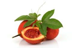 Плодоовощ Gac, джекфрут младенца, колючая горькая тыква, сладостная тыква или тыква Cochinchin, плодоовощ Стоковое Изображение RF