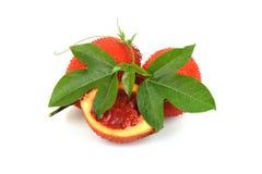 Плодоовощ Gac, джекфрут младенца, колючая горькая тыква, сладостная тыква или тыква Cochinchin, плодоовощ Стоковые Фото