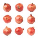 Плодоовощ granatum punica гранатового дерева Стоковая Фотография