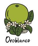 Плодоовощ Oroblanco Бесплатная Иллюстрация