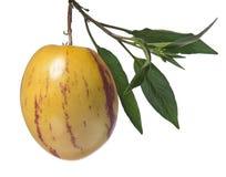 Плодоовощ Pepino Стоковые Изображения