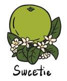 Плодоовощ Sweetie Иллюстрация штока