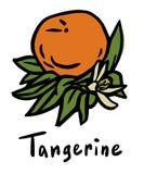 Плодоовощ Tangerine Иллюстрация штока