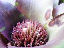 плодолистик Стоковое Изображение RF