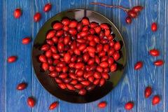Плод шиповника Стоковые Фотографии RF