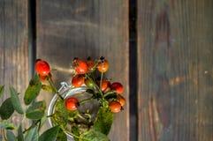 Плод шиповника Стоковые Изображения