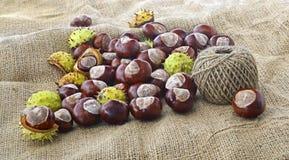 Плоды конского каштана и шарик строки Стоковое Фото