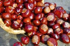 Плоды конского каштана Стоковые Фото