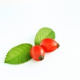 Плоды шиповника  Стоковое фото RF