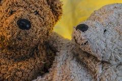 2 плюшевого медвежонка рядом друг с другом Стоковые Фотографии RF