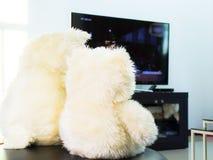Плюшевый медвежонок в живущей комнате Стоковые Изображения RF