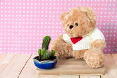 Плюшевый медвежонок и меньший кактус Стоковые Изображения RF