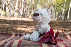 Плюшевый медвежонок с листьями осени в лесе Стоковое фото RF