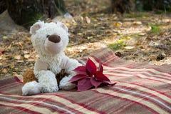 Плюшевый медвежонок с листьями осени на шотландке в лесе Стоковые Изображения