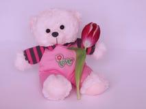 Плюшевый медвежонок с тюльпаном - фото запаса дня валентинок Стоковые Изображения