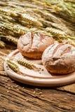 2 плюшки с зернами и ушами Стоковая Фотография RF