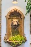Плющ в баке головы льва Стоковая Фотография