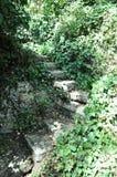Плющ лестниц Стоковое Изображение