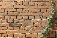 Плющ на кирпичной стене Стоковая Фотография RF