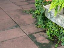 Плющ на конкретном коридоре пола в парке Стоковая Фотография