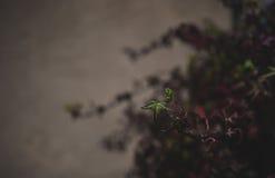 Плющ осени Стоковая Фотография RF