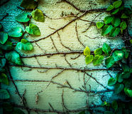 Плющ растет вверх на стене Стоковые Фотографии RF