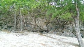 Пляжи Барбадос Стоковое Изображение RF