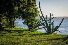 Пляжи Бразилии - пипы, Риу-Гранди-ду-Норти Стоковые Изображения