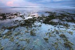 Пляжи с морской водорослью и кораллами стоковое изображение rf