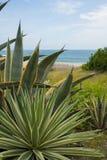 Пляжи Южной Америки 5 Стоковые Изображения RF