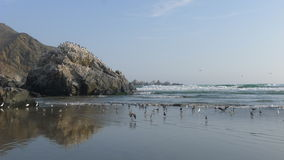Пляжный комплекс Totoritas Лимы, Перу Стоковое Изображение RF
