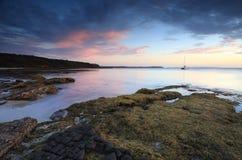 Пляж Австралия дерева капусты Стоковые Фотографии RF