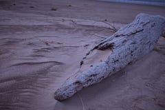 Пляж Великих озер в зиме Стоковые Изображения RF