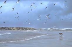 пляж в зиме Стоковые Изображения