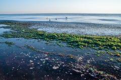 Пляж в морской водоросли Стоковое фото RF