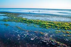 Пляж в морской водоросли Стоковые Фото
