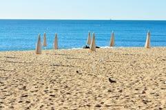 Пляж в утре с солитарными птицами Стоковые Фотографии RF