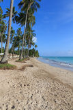 Пляж в Maragogi, Alagoas - Бразилии Стоковые Изображения