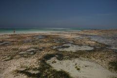 Пляж в Michamwi-Pingwe Занзибар, Стоковые Фото