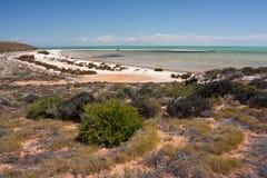 Пляж в Sharkbay Стоковые Фото